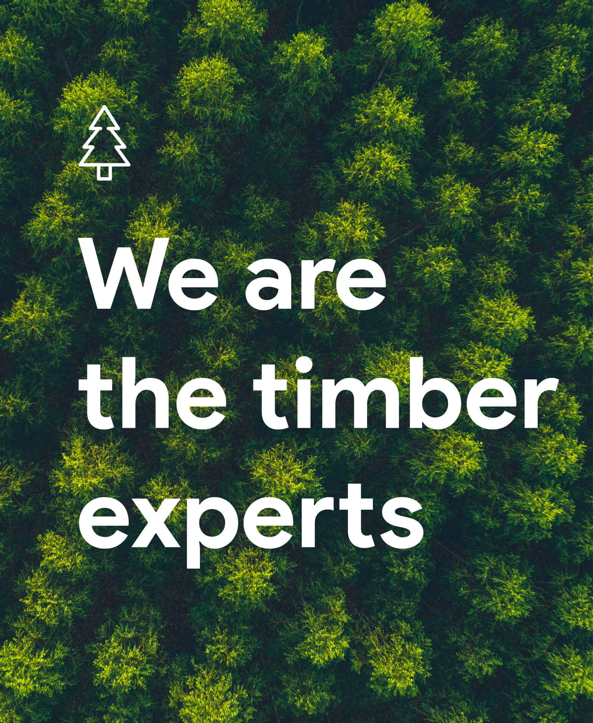 We are the timber experts